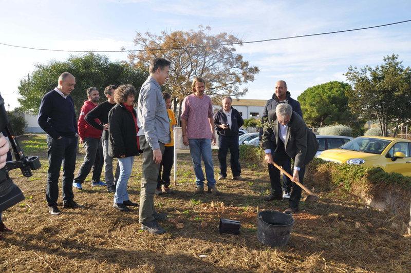 Plantació a Torredembarra