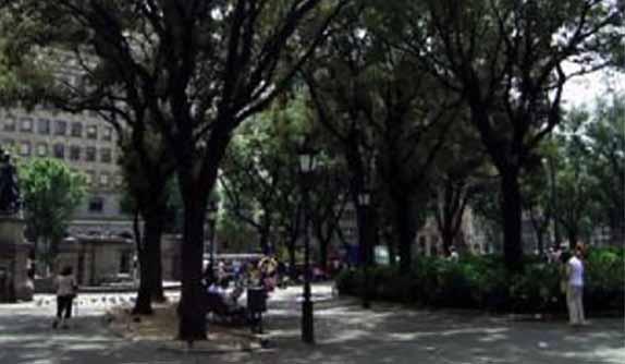 Alzina Plaça Catalunya