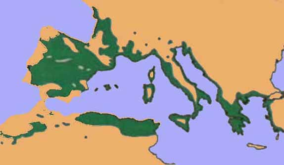 alzinar_areamediterrania
