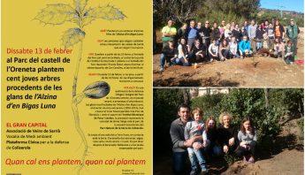 plantada al parc de l'oreneta